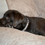 Protect Your Couch from Your Pet